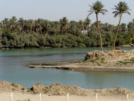 Palm Trees Along the Euphrates River