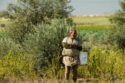 Farmer from Johr Al-Deek, Gaza  Photo: Johnny Barber, November 28th, 2012