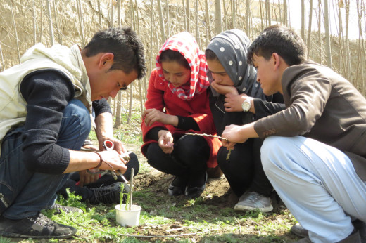 Permaculture-grafting