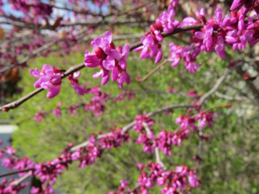 04-Babur-Garden-Green-Multicolours